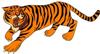 angry tiger as a graphic image
