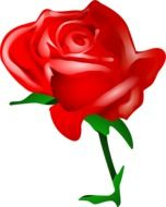 red rose drawn in computer graphics