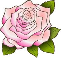 pink rose, vintage drawing