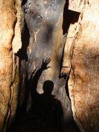 shadow of man on tree trunk