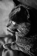 photo of home black cat