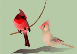 pink birds drawing