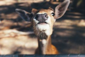 Portrait of cute deer
