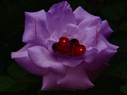 on purple flower two red hearts