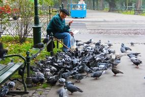 elderly man and a flock of pigeons in a park in Krakow, Poland