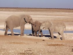 elephant family at a watering place in the wild