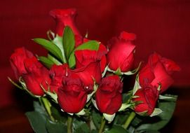 romantic bouquet of red roses on a red background