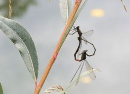dragonflies on a plant