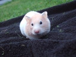 photo of the cute hamster