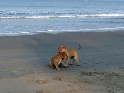 cute puppies on the beach
