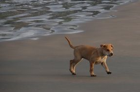 puppy playing on the beach