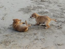 two puppies are playing on the beach
