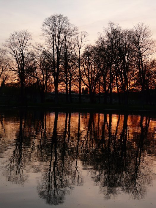 tree silhouettes reflected in the river at sunset