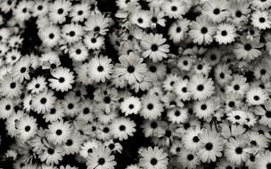 Tumblr Black And White Flowers drawing