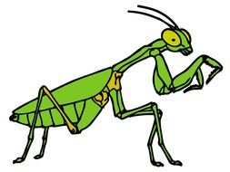 green grasshopper Clip Art