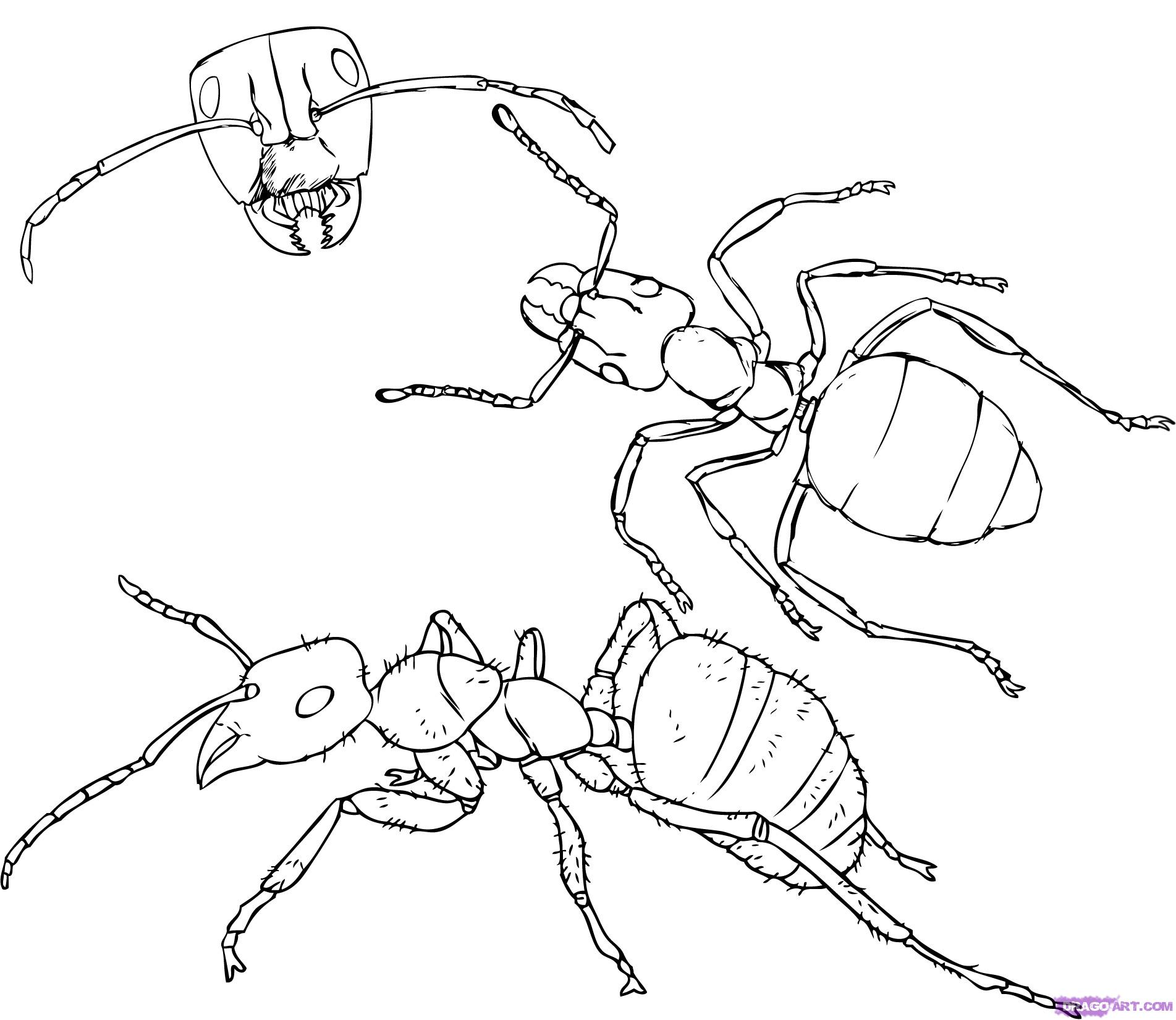 how to draw ant free image