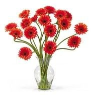 Clip art of potted Daisy Flowers