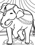 Circus Elephant Coloring Pages drawing