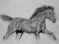 pencil drawing running horse