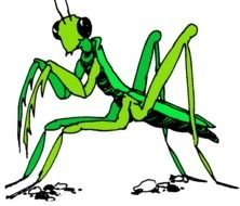 drawing of a mantis on a black background