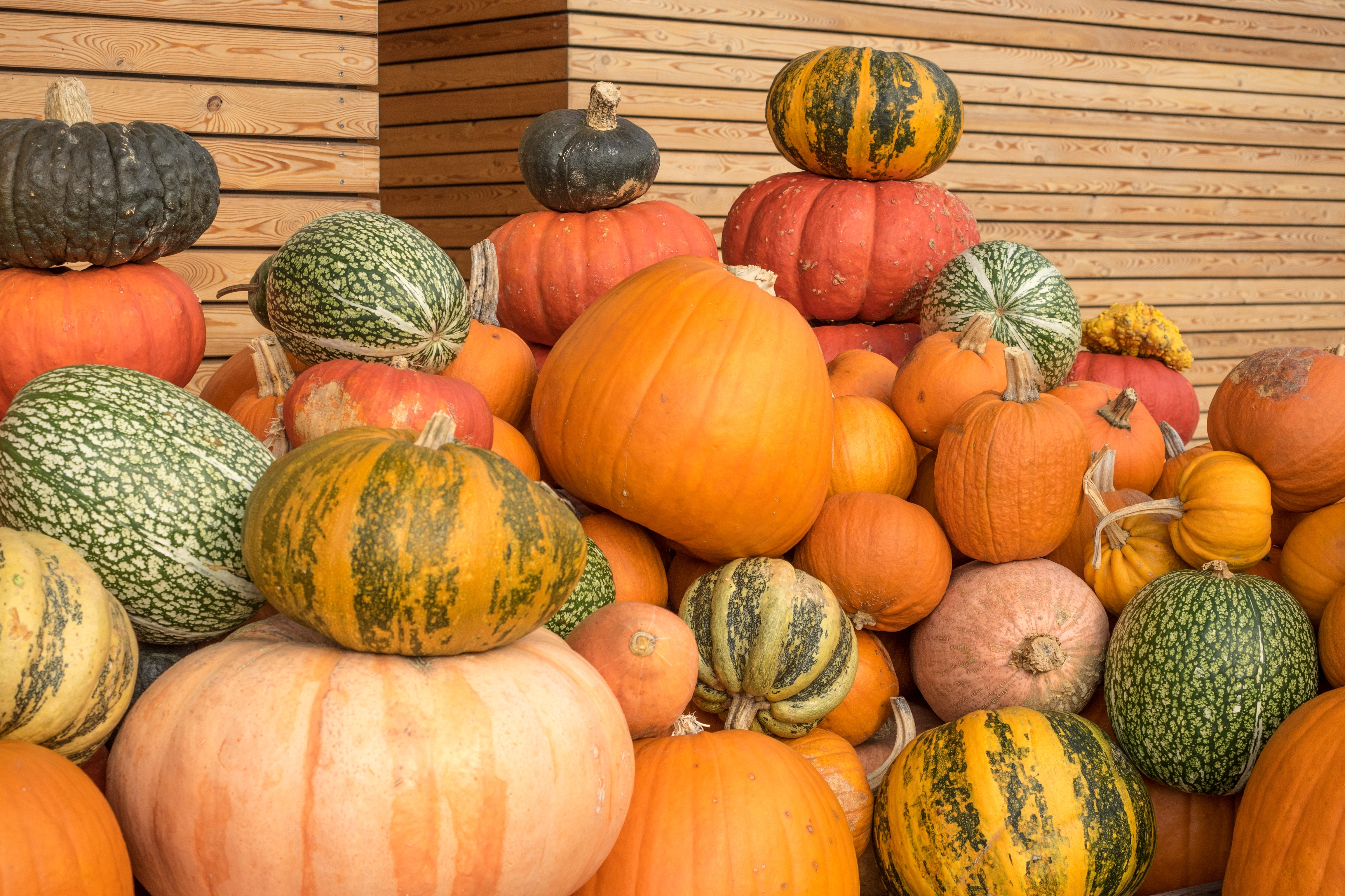 Pictures of different colored pumpkins