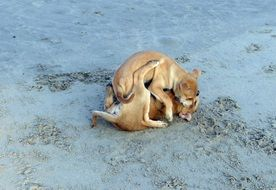 puppys playing on the beach sand