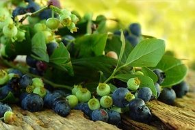 fruit blueberries harvest summer