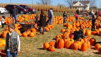 pumpkin patch people