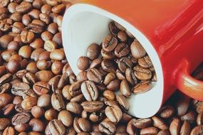 coffee beans grains drink