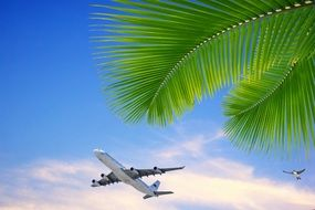 airplane taking off in tropics