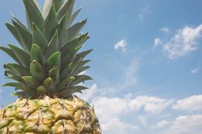 pineapple on a sky background