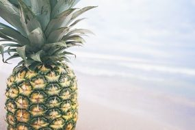 tropical delicious pineapple