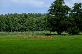 herd of deer in a green meadow