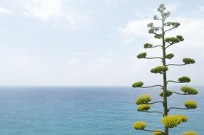 small green tree in front of a large torquise ocean