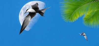 tropical birds on the blue sky