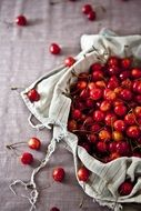 fresh small sour cherries
