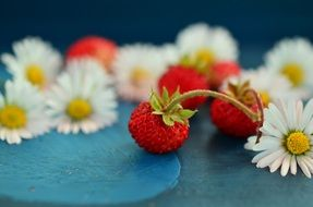 strawberries and wild daisies lying in a big beautiful pile