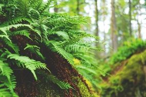 young green fern plant in a wild forest close-up