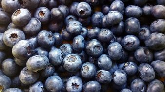 life, beauty, scene ,health ,wellbeing,blueberry,blue,berry