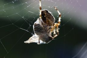 spider stuck in its own spiderweb