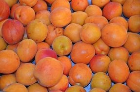 apricot fruit food healthy