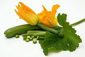 zucchini and its golden blossom