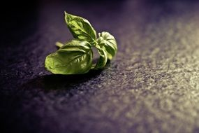 basil spice plant food green herb leaf