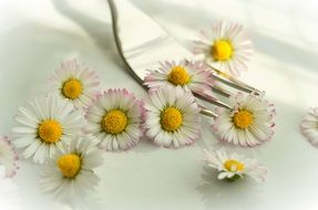 chamomile is an edible flower for vegetarians