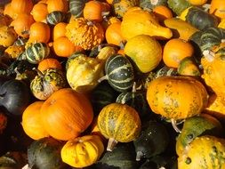 A lot of orange and green pumpkins