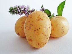 juicy and fresh potatoes