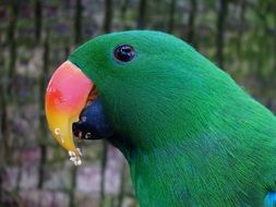 green parrot near a tree