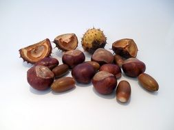 brown chestnuts and acorns