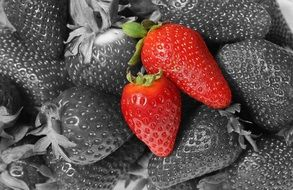 red strawberries on a black white photo