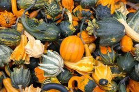 green and yellow decorative squashes